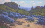 John Gamble - Bush Lupine, Near Del Monte