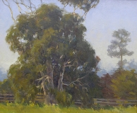 Gregory Hull - Eucalyptus Morning