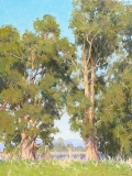 Gregory Hull - Eucalyptus Grove