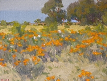Gregory Hull - Coastal Poppies